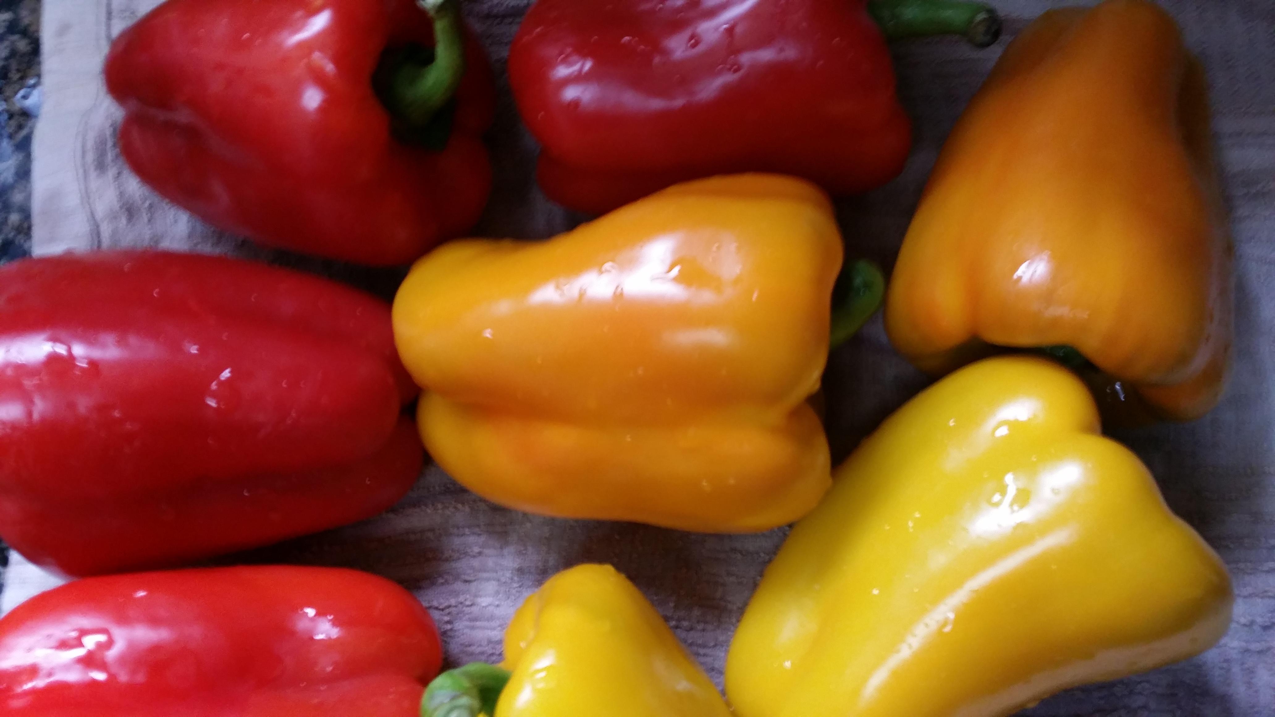 fylld paprika 1